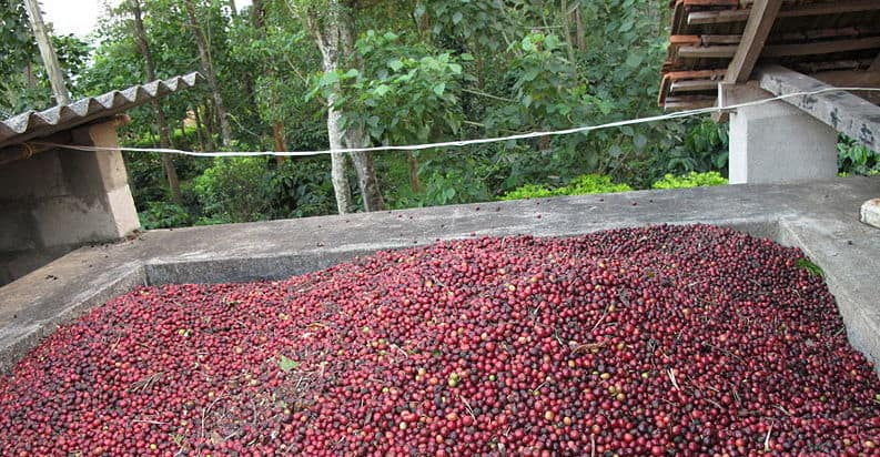 india coffee beans