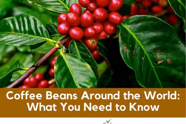 Where Does Coffee Come From: Top 11 Countries You Need To Know