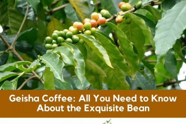 Geisha Coffee: All You Need to Know About the Exquisite Bean
