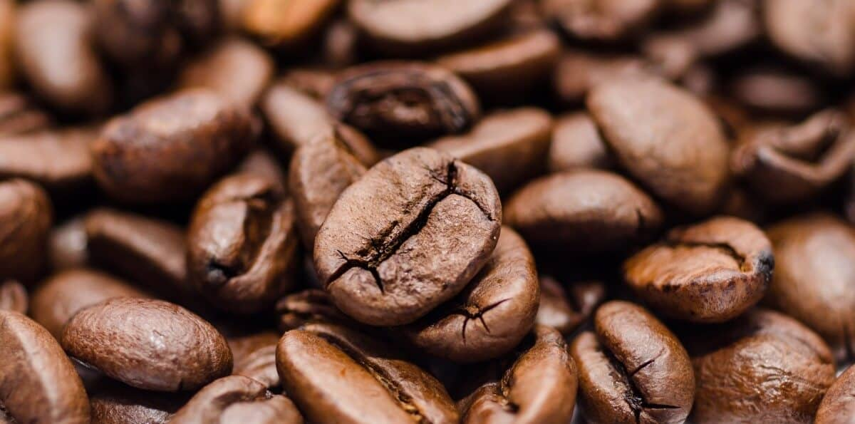 best light roast coffee brands buying guide